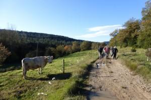 Vaca encuriosida